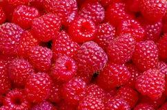新近地被采摘的成熟红草莓的一个美好的选择 免版税库存图片