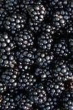 新近地被采摘的有机黑莓 库存图片