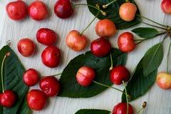 新近地被采摘的樱桃,驱散在轻的背景 免版税图库摄影
