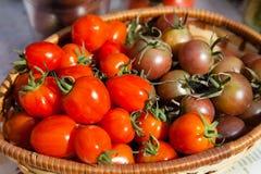 新近地被采摘的红色和紫色蕃茄 免版税图库摄影