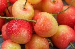 新近地被采摘的红色和黄色更加多雨的樱桃特写镜头 免版税库存图片