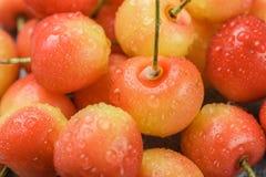 新近地被采摘的红色和黄色更加多雨的樱桃特写镜头 免版税图库摄影
