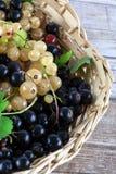 新近地被采摘的莓果 库存图片