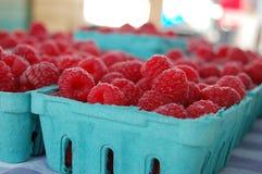 新近地被采摘的莓 库存图片
