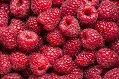 新近地被采摘的莓 免版税库存照片