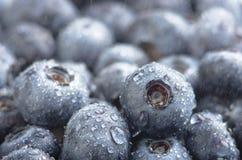 新近地被采摘的蓝莓背景 库存照片