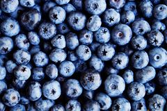 新近地被采摘的蓝莓backgrond 背景蓝莓食物健康有机 在白色背景顶视图,平的位置样式的蓝莓 免版税库存图片