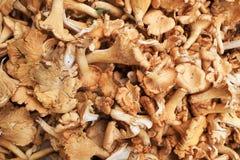 新近地被采摘的蘑菇 免版税库存图片
