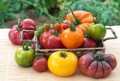 新近地被采摘的,家种的蕃茄Varitey  免版税库存图片