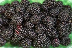 新近地采摘了黑莓,可口背景 库存照片