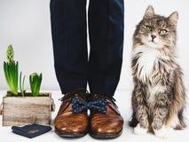 新郎、圆环、花、蝶形领结和逗人喜爱的小猫 免版税库存照片