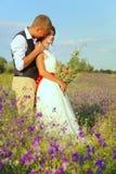 新郎亲吻脖子的新娘在紫色花的一个花草甸 夏天婚礼 免版税库存照片