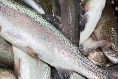新钓鱼的鳟鱼准备 免版税库存图片