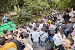 新闻工作者和访客在成都研究大熊猫饲养基地  免版税库存图片