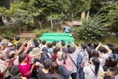 新闻工作者和访客在成都研究大熊猫饲养基地  库存照片