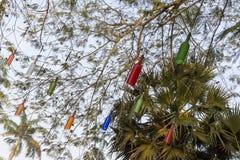 新闻纪录片的社论 AUROVILLE,泰米尔纳德邦,印度- 2018年2月28日 与黎明fireOn Auroville ` s 50 ye的集体凝思 免版税图库摄影
