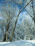 新降雪风景 免版税图库摄影