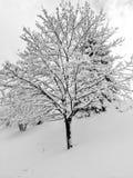 新降雪风景 免版税库存图片