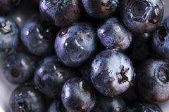 新鲜健康暴躁充分维生素与露水的蓝莓莓果 免版税库存照片
