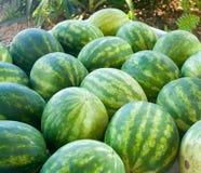 新鲜农产品西瓜 免版税库存图片