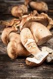 新鲜和干空白蘑菇 库存图片