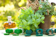 新鲜和干草本-香料 免版税库存图片