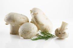 新鲜和开胃蘑菇 免版税库存图片