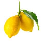 新鲜和成熟柠檬 免版税库存照片