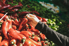 新鲜和有机蔬菜在农夫市场上 市场 自然产物 辣椒粉 胡椒 自然地方产品 免版税库存照片