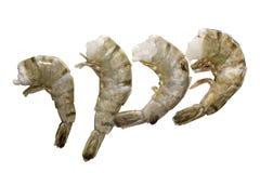 新鲜和湿未加工的老虎虾 免版税库存照片