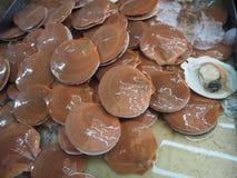 新鲜和生活加调料烘烤在冰水的Pectinidaei 图库摄影