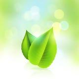 新鲜和绿色 库存例证