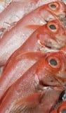 新鲜和野生被捉住的金眼鲷& x28; Beryx decadactylus, Chikame kintoki& x29; 免版税库存图片