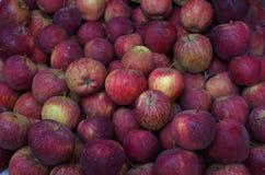 新鲜和水多的kinnore苹果 免版税库存图片