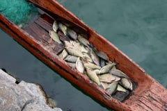 新鲜小船的鱼 库存图片