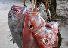 新鲜抓住的鱼 库存照片