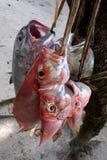 新鲜抓住的鱼 免版税库存图片