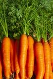 新鲜捆绑的红萝卜 免版税库存照片