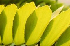新鲜棕榈树离开与早晨光 免版税库存图片