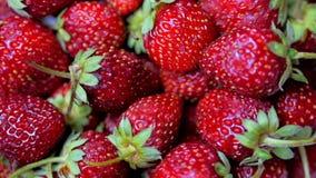 新鲜水果开胃和美丽的草莓当食物背景 有机健康成熟草莓营养 股票录像