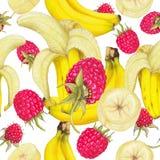 新鲜水果的无缝的样式 免版税库存照片