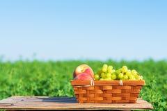 新鲜水果葡萄和桃子在篮子外面在绿色草甸和天空蔚蓝背景晴朗的夏日 免版税库存图片