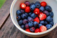 新鲜浆果的森林 免版税库存照片