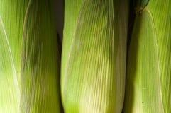 新鲜玉米棒的玉米 免版税库存图片