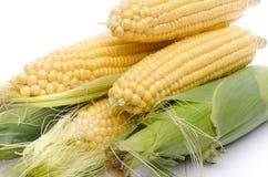 新鲜玉米棒的玉米 图库摄影