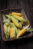 新鲜玉米棒的玉米 免版税图库摄影
