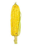 新鲜玉米被隔绝的图象 免版税库存照片