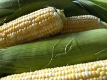 新鲜玉米 库存照片