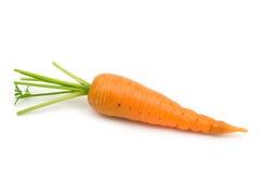 新鲜生物的红萝卜 免版税库存图片