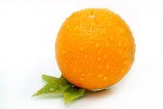 新鲜的一个桔子 免版税库存照片